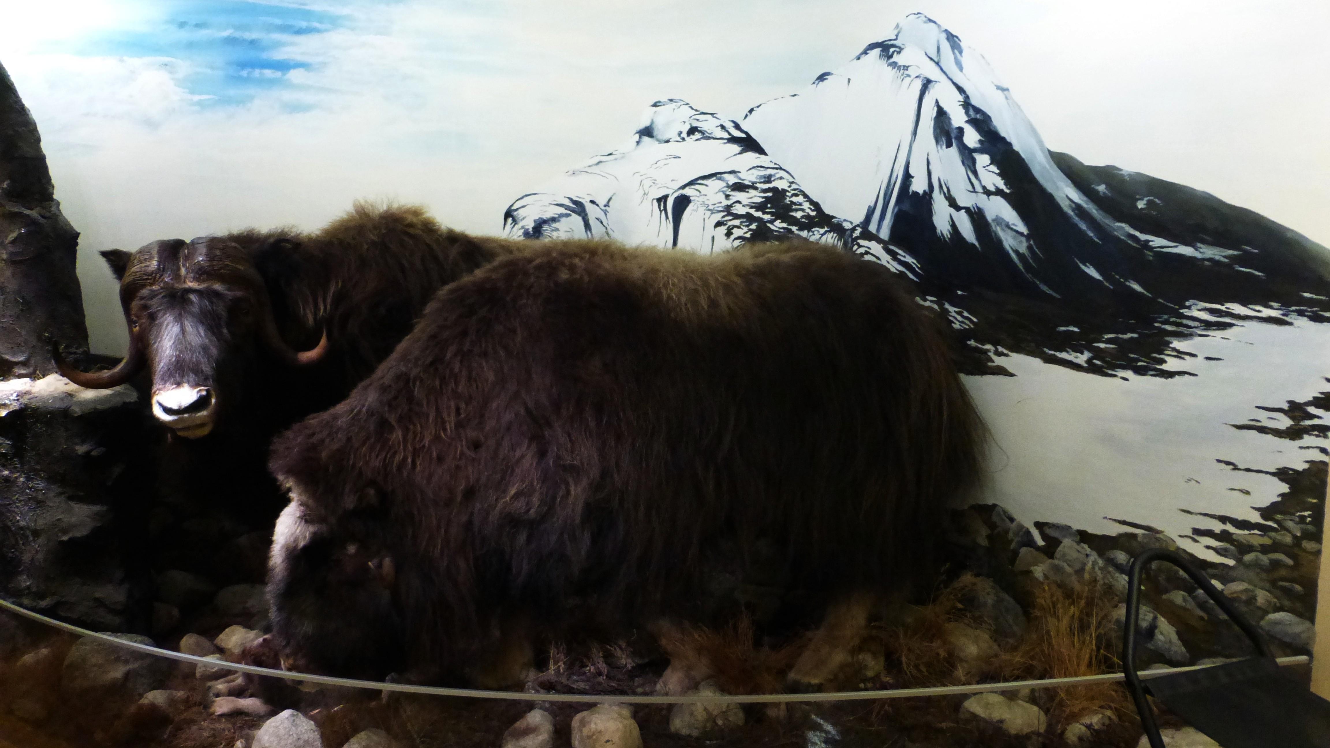 2015-06-22 (51) Tromso musée polaire